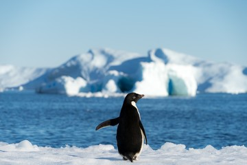 penguin antarctica © Best Stock Images