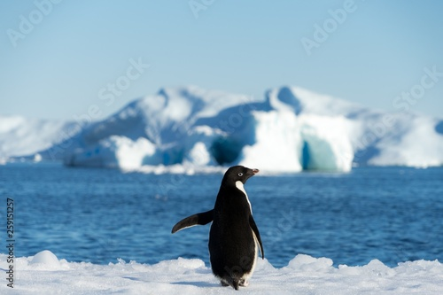 penguin antarctica © Best Stock Images