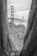 Goden Gate Bridge San Francisco