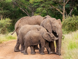 a close up of an Elephant family playing with their little baby