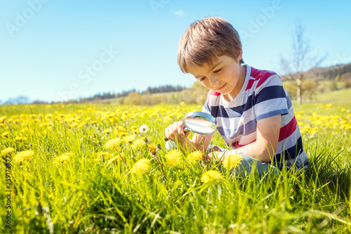 Child exploring nature in a meadow - 259172877
