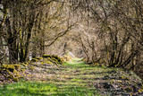 Fototapeta Fototapeta las, drzewa - Chemin de pierres seiches en bourgogne, Saône-et-Loire © Sokarys