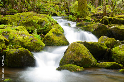 White water stream surrounded with new growth leaves in spring. © bettys4240