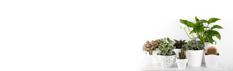 Houseplants in modern flowerpots © Lana_M