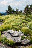 Fototapeta Fototapety z naturą - Grandfather Mountain in summer season. © bettys4240