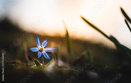 Blume im Sonnenlicht - 259230680