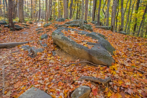 fototapeta na ścianę Fallen leaves covers a large rock and ground in the Smoky Mountains.
