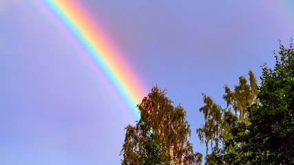 Rainbow in the blue sky over the forest on a summer day