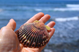 Hand holding sea shell on a blurred ocean waves background. Seashell  in women's palm against sea water with space for text.Summer,beach vacation,relax or travel concept. Selective focus.  - 259251279