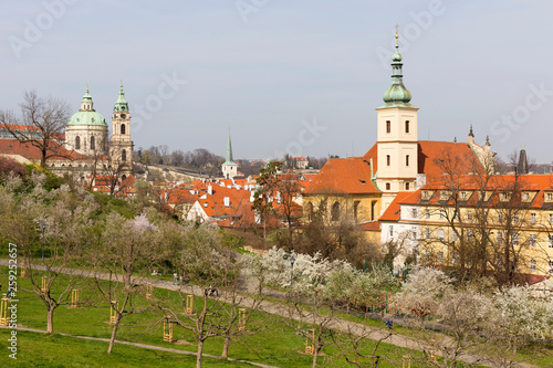 fototapeta na ścianę Early spring Prague City with the green Nature and flowering Trees, Czech Republic