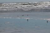 Pêcheurs Chiloé