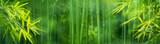 Fototapeta Fototapety do sypialni - Bamboo forest © lily