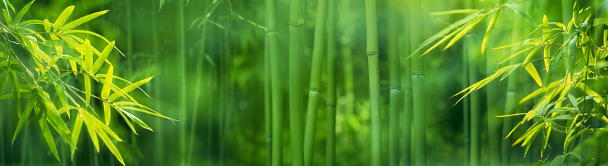Bamboo forest © lily