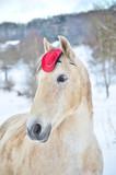 Fototapeta Fototapety z końmi - Pferd © Eva