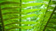 12597_The_fern_plant_inside_the_botanical_garden.jpg - 259373045