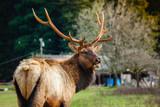 Elk in forest in moutians