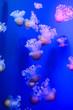 Leinwandbild Motiv Jellyfish Dangerous Poisonous Medusa