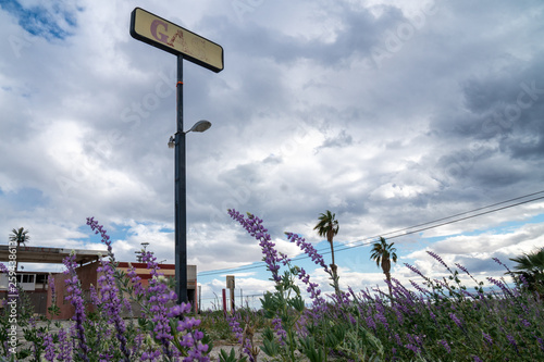 canvas print picture Sign for an abandoned gas station along California Route 111 highway in the Salton Sea. Purple desert lupines wildflowers in foreground