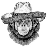 Chimpanzee Monkey wearing traditional mexican hat. Classic headdress, fiesta, party.