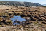Fototapeta Fototapety z naturą - Charca en la Sierra Paramera. Avila. España. Europa. © ABUELO RAMIRO