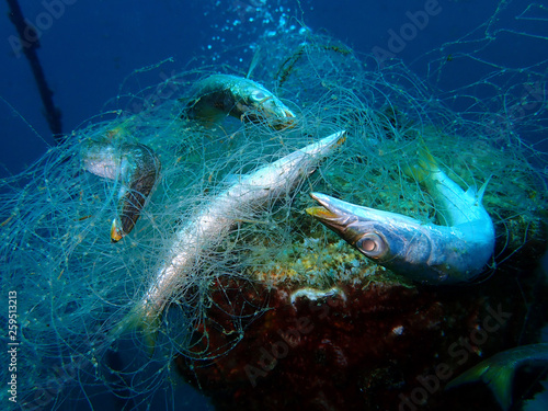 fototapeta na ścianę Ghost nets are commercial fishing nets that have been lost, abandoned, or discarded at sea. Every year they are responsible for trapping and killing millions of marine animals in the ocean.