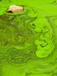 Leinwandbild Motiv green water with moss texture
