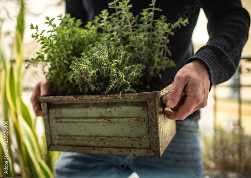canvas print picture Urban Gardening | Herbs
