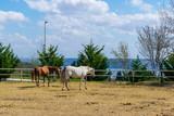 Fototapeta Fototapety z końmi - Horses on the Farm © Burcu
