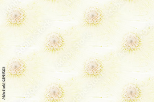 Modern abstract seamless pattern. Geometric background. Fractal, spiral, curl - 259587203