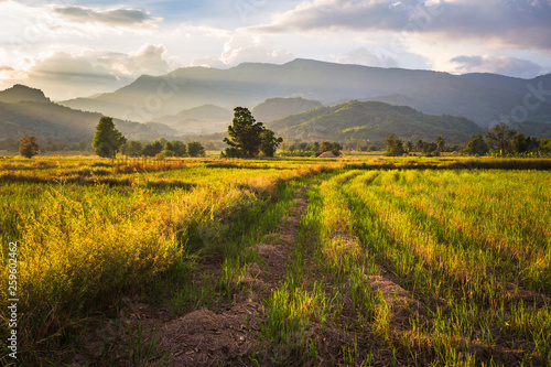 Countryside View at Petchabun, Thailand - 259602462