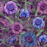 Beautiful Centaurea flowers with green leaves on  purple background. Seamless floral pattern.  Watercolor painting. Hand painted botanical illustration