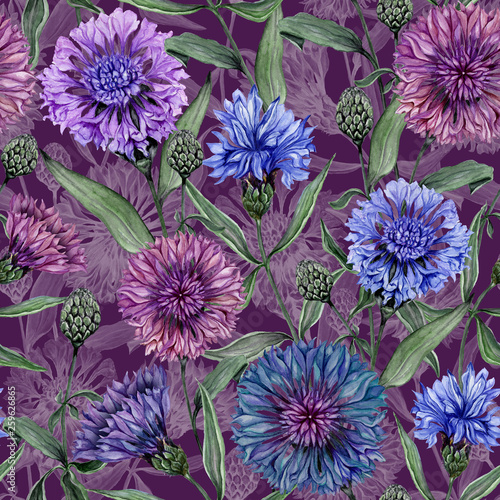 Leinwanddruck Bild Beautiful Centaurea flowers with green leaves on  purple background. Seamless floral pattern.  Watercolor painting. Hand painted botanical illustration