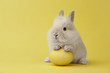 Easter bunny with egg on yellow background - 259636484