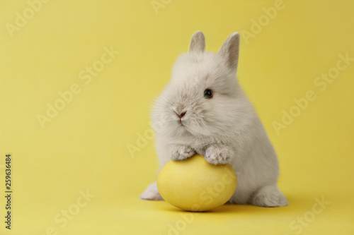 Easter bunny with egg on yellow background © kobeza