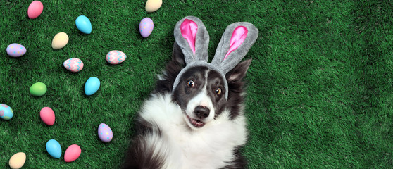 Happy dog with bunny ears surrounded by Easter eggs © Leigh Prather