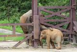 Elephant dad and baby elephant