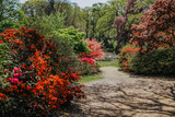 Spring time colourful rhododendron and azalea landscape garden on sunny day. England.