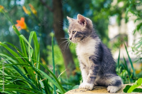 Leinwandbild Motiv kitten cat stray cute pet. adorable outside.