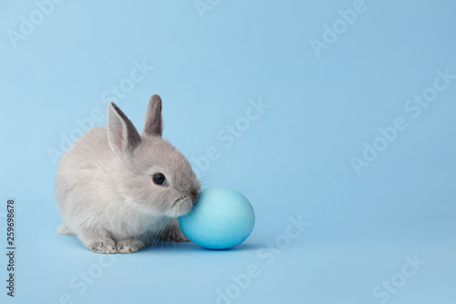 Easter bunny with egg on blue background - 259698678