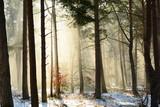 Fototapeta  - Wschodzące słońce w zimowym, leśnym krajobrazie © milena1990