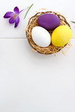 Purple crocus and easter Eggs in the nest isolated on white wood Background.
