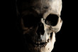 Contrast image of a real human skull on a dark background. Isolated on black.