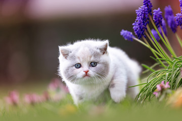 Katze Kitten im Frühling auf einer Wiese