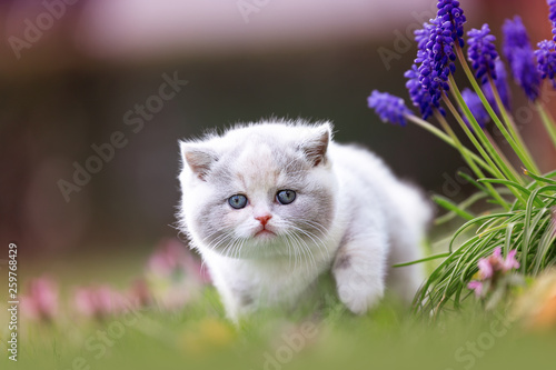 fototapeta na ścianę Katze Kitten im Frühling auf einer Wiese