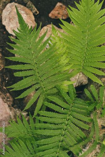 ferns on a stone background