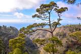 Fototapeta Fototapety na ścianę - Pine Tree View © underworld