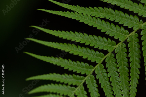 isolated green fern frond leaf on black background