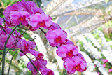 beautiful orchids flower in the garden background