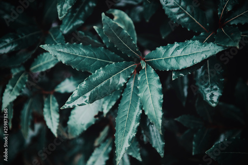 Beautiful tropical green leaves after rain with drops background
