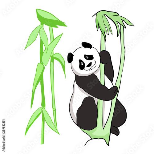 Vector drawing, color illustration, panda bear